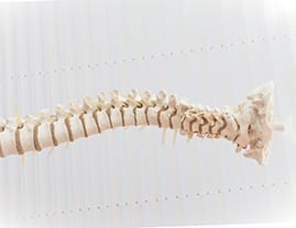 Photograph of spine